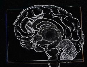 GehirnElke2018Kopie