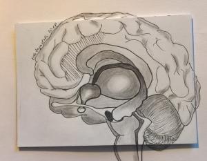 GehirnElke2018Orginal