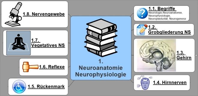 NeuroAnatomiePhysiologie
