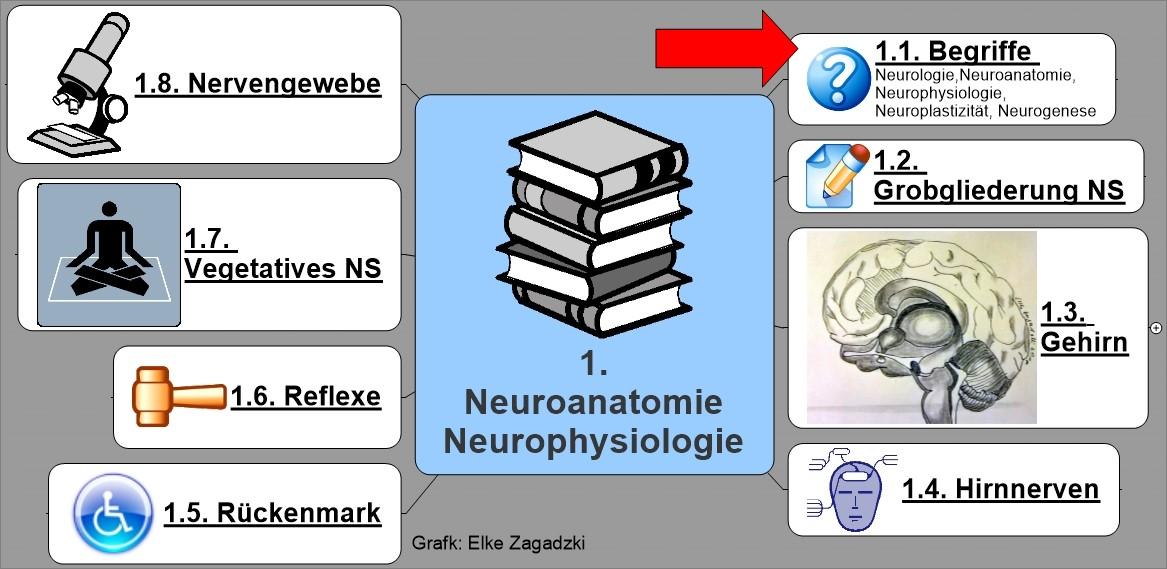 1.1. NeuroAnatomiePhysiologie Begriffe