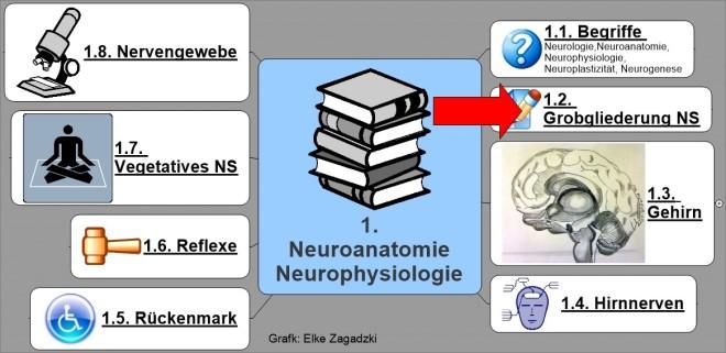 1.2. NeuroAnatomiePhysiologieGrobgliederung NS