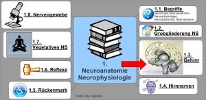1.3. NeuroAnatomiePhysiologie Gehirn