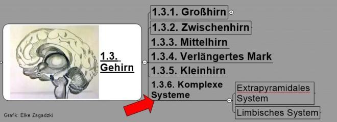 1.3.1.Gehirn-Komplexe Strukturen