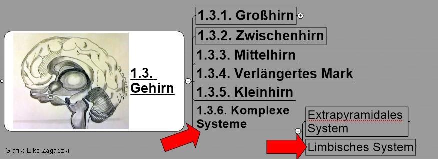 1.3.1.Gehirn-Komplexe StrukturenLimbisches System